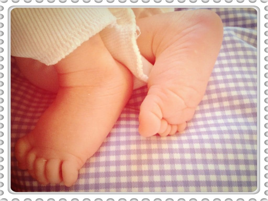 Hasennase Füße