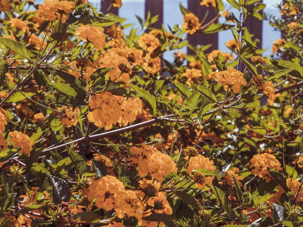 Soller Jumeirah Flowers